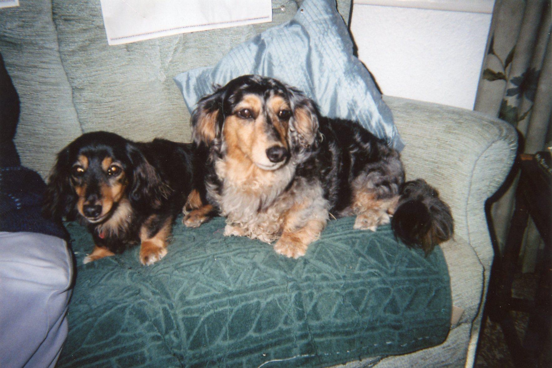 home 2 Midge & Dudley